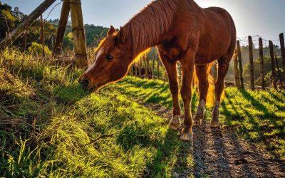 Plantes toxiques chez les chevaux